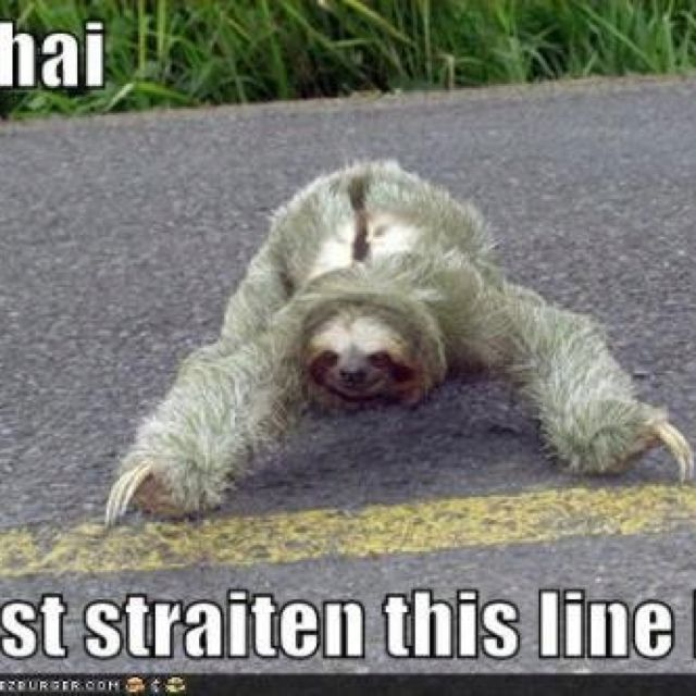 Cute sloth (ignore the...