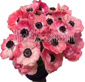 Pink Anemone Flowers When It Comes To Wedding Flowers You Cannot Expect The Scenario To Be Complete Without Bulk Anem Anemone Flower Anemone Flower Pictures