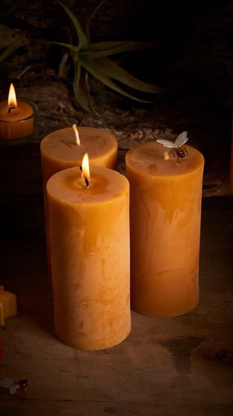 Beeswax Is The Most Precious Wax Of All Candles Made From Beeswax
