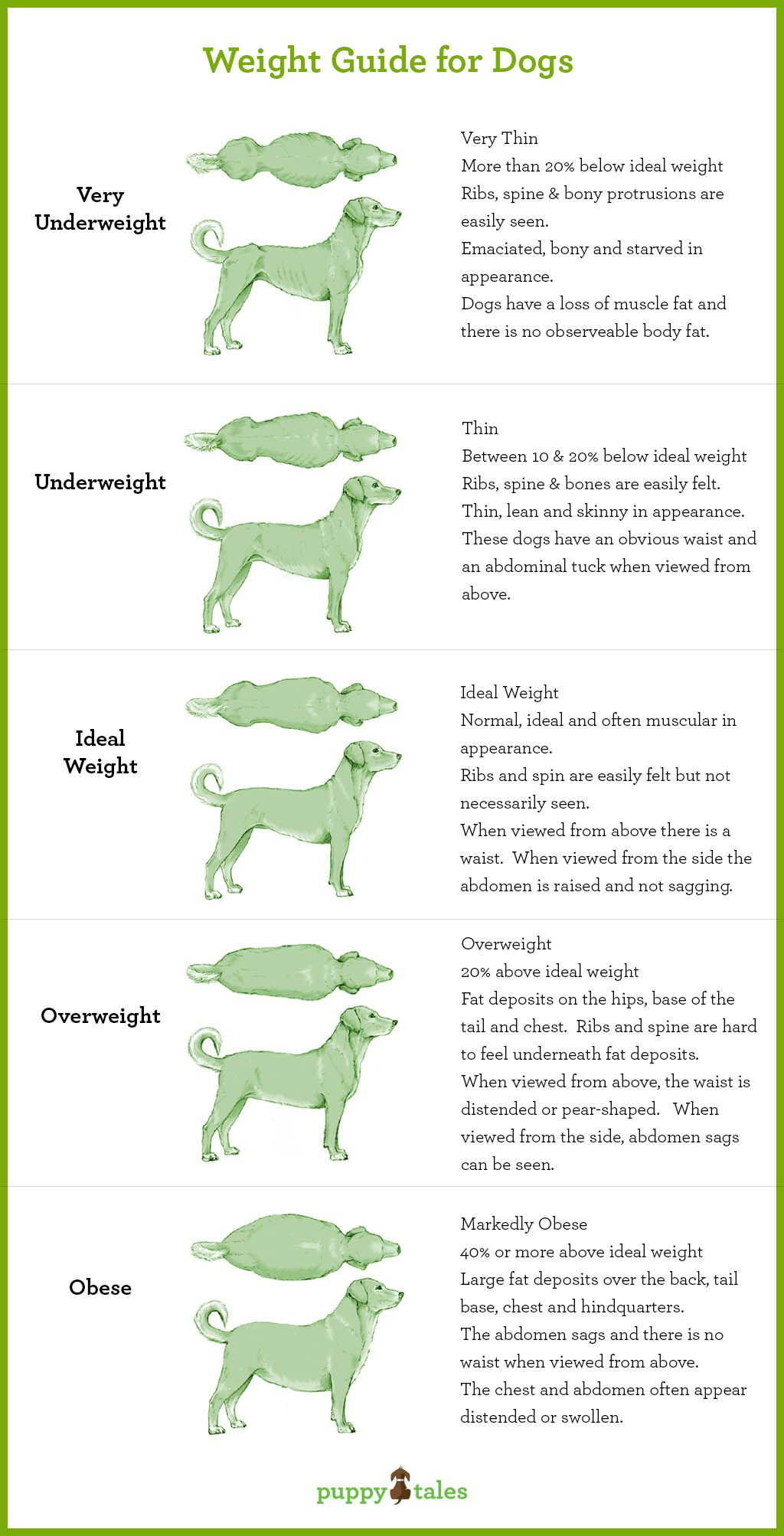 Canine Obesity And How To Avoid Your Dog Passing Away Before
