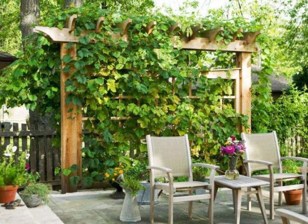 Growing Grapes At Home Privacy Landscaping Small 640 x 480