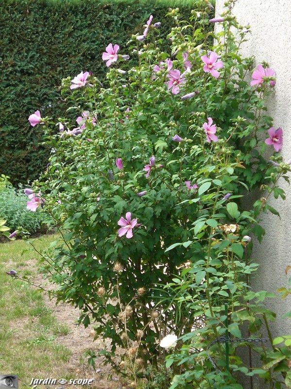 Épinglé sur Κηπουρική σε γλάστρες