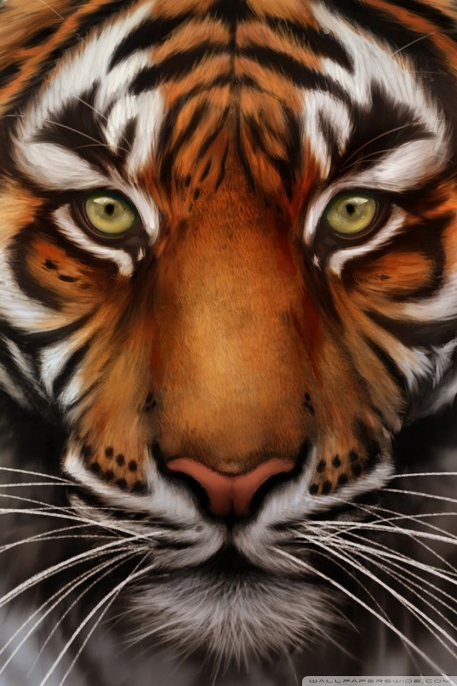 Tiger Wallpaper For Iphone Tiger wallpaper, Tiger face