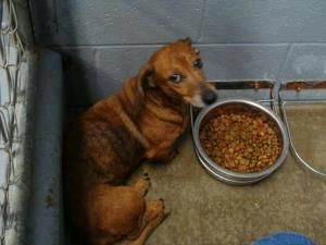 Please Help Rescue In Kentucky Needed Shelby Is A Senior