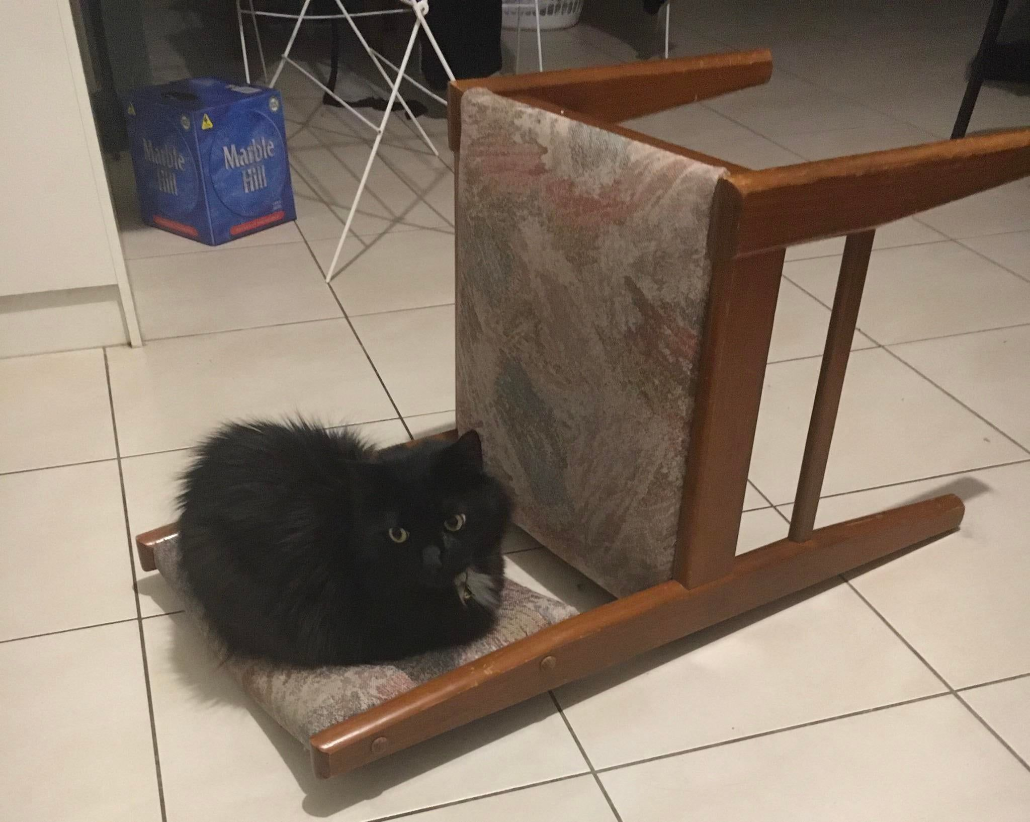 He Knocked Over This Chair And Became A Loaf Meow Moe In 2020 Knock Knock Loaf How To Become