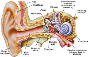 If you are suffering from a throbbing or pulsating sound in