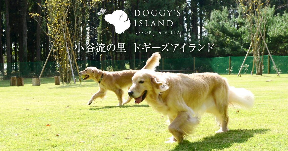 ドギーズアイランド小谷流の里 公式サイト 東京から最速55分 自然に恵まれた千葉県八街市小谷流 ドッグラン ホテル レストランなど愛犬と楽しむ日本最大級のドッグリゾート リゾート 楽しむ 都心