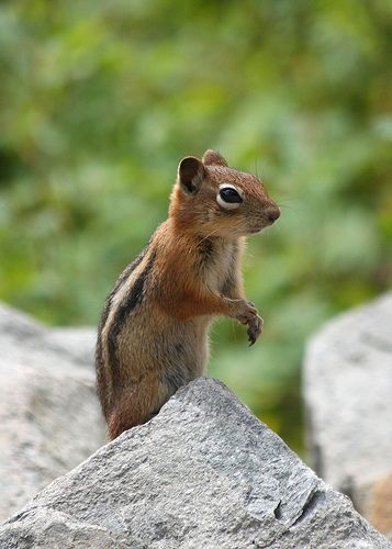 What Food Does A Ground Squirrel Eat
