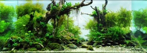 Genial EXtreme Aquascapes By Takashi Amano.