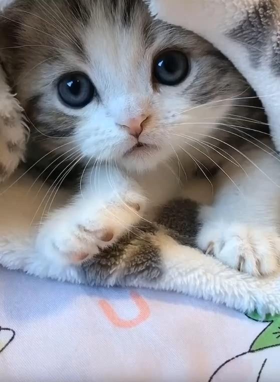 So Cute Kitten �