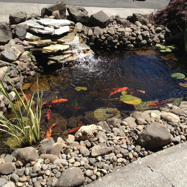 Pond, Ponds Backyard, Lake