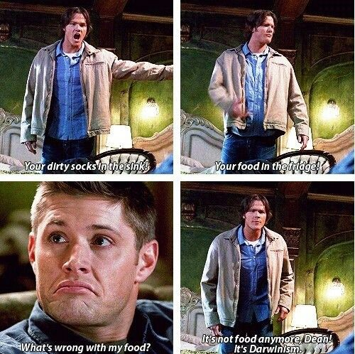"Supernatural ""It's not food anymore Dean! It's Darwinism!"""