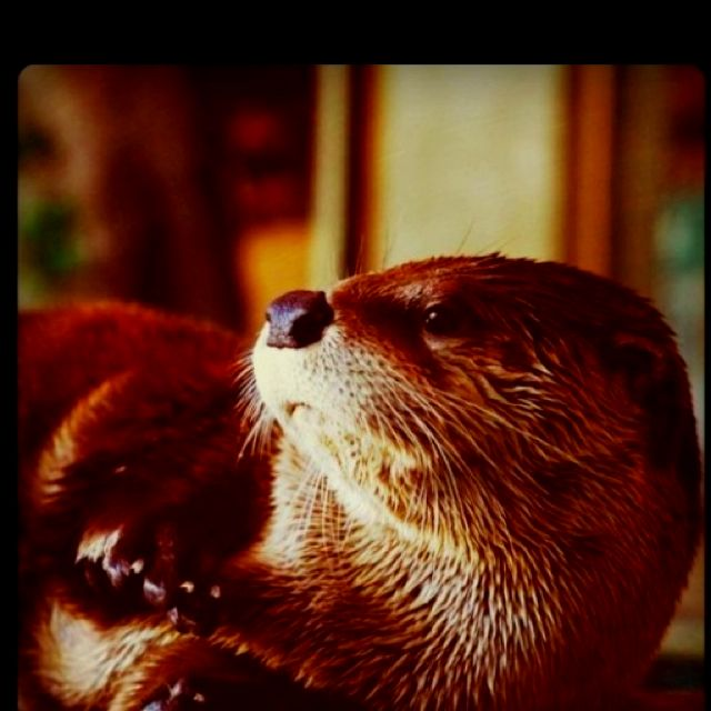 Just another day in otter paradise