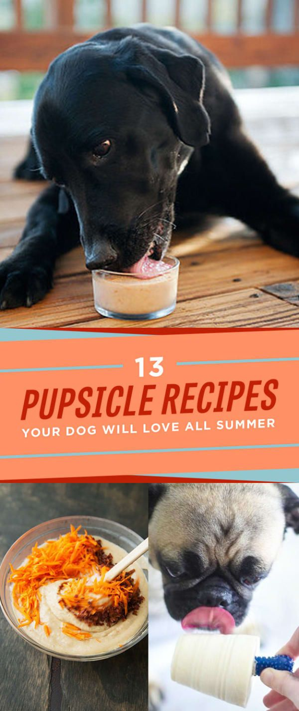 13 Frozen Treats To Make For Your Doggo All Summer Long