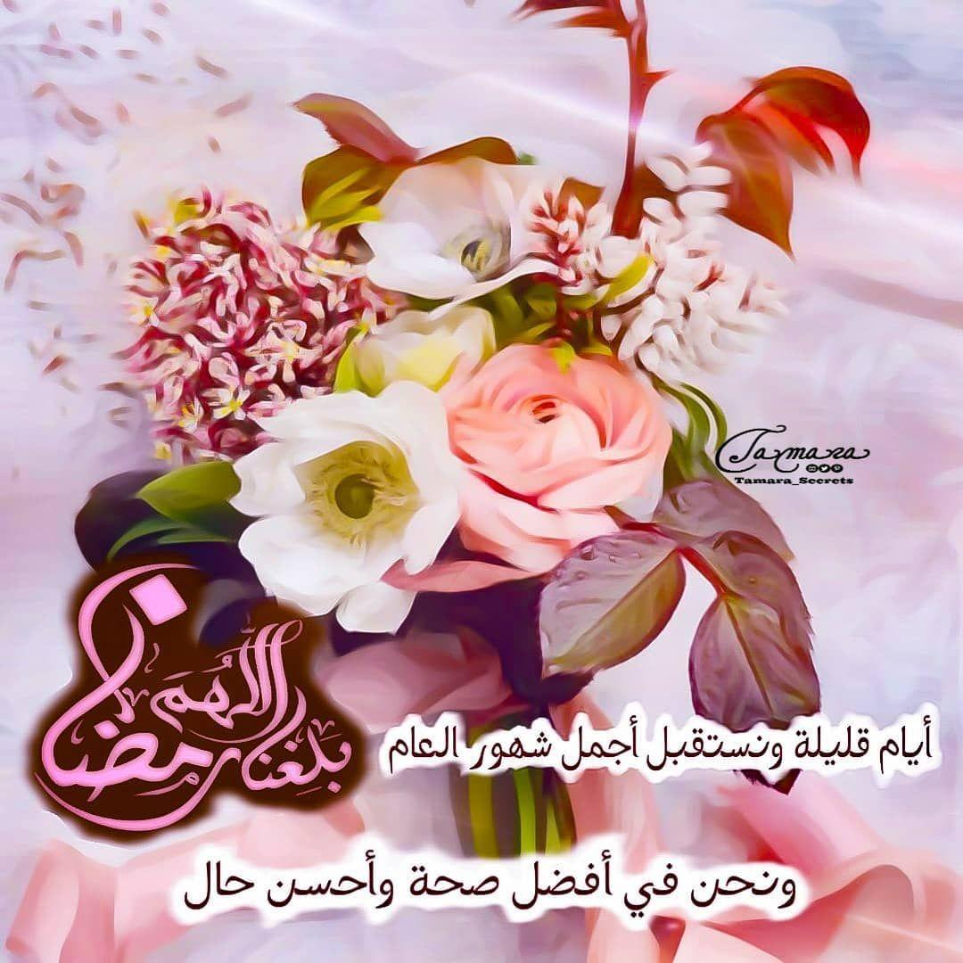 1 Likes 0 Comments Tamara Secrets Tamara Secrets On Instagram أيام قليلة ونستقبل أجمل شهور العام الل هم بلغنا رمضان و نحن في أفضل Rose Plants Flowers