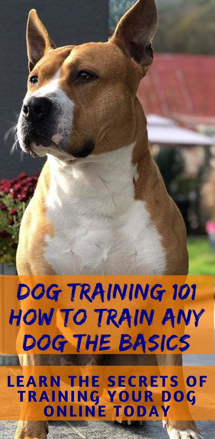 The Online Dog Trainer Review Training Your Dog Dog Training