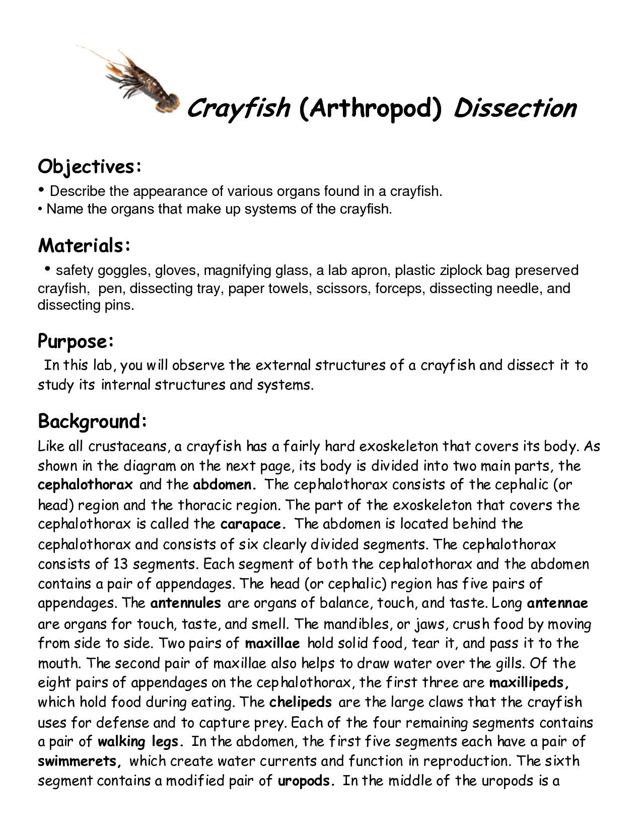 Formal Crayfish Dissection Worksheet Answers