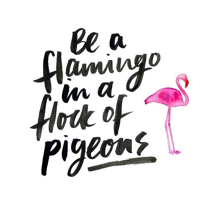 Stand Out Quotes Why blend in when you could stand out??! #mantra #quote #flamingo  Stand Out Quotes