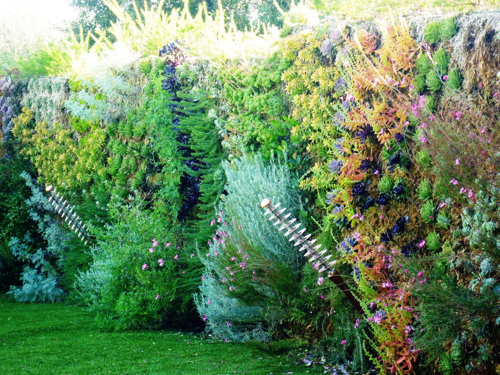 Creation Mur Vegetal Exterieur pieri jardins création mur végétal,jardin contemporain