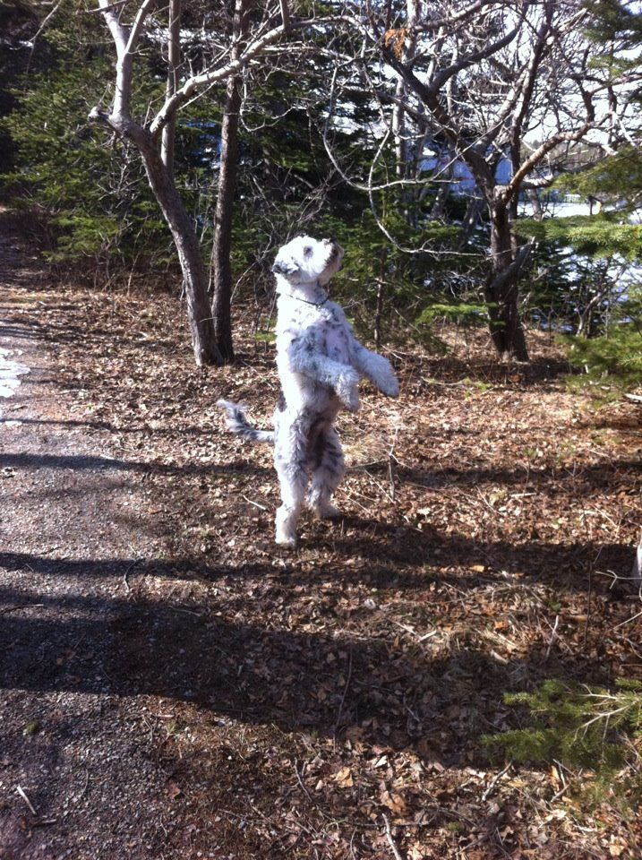 Trying to catch a squirrel