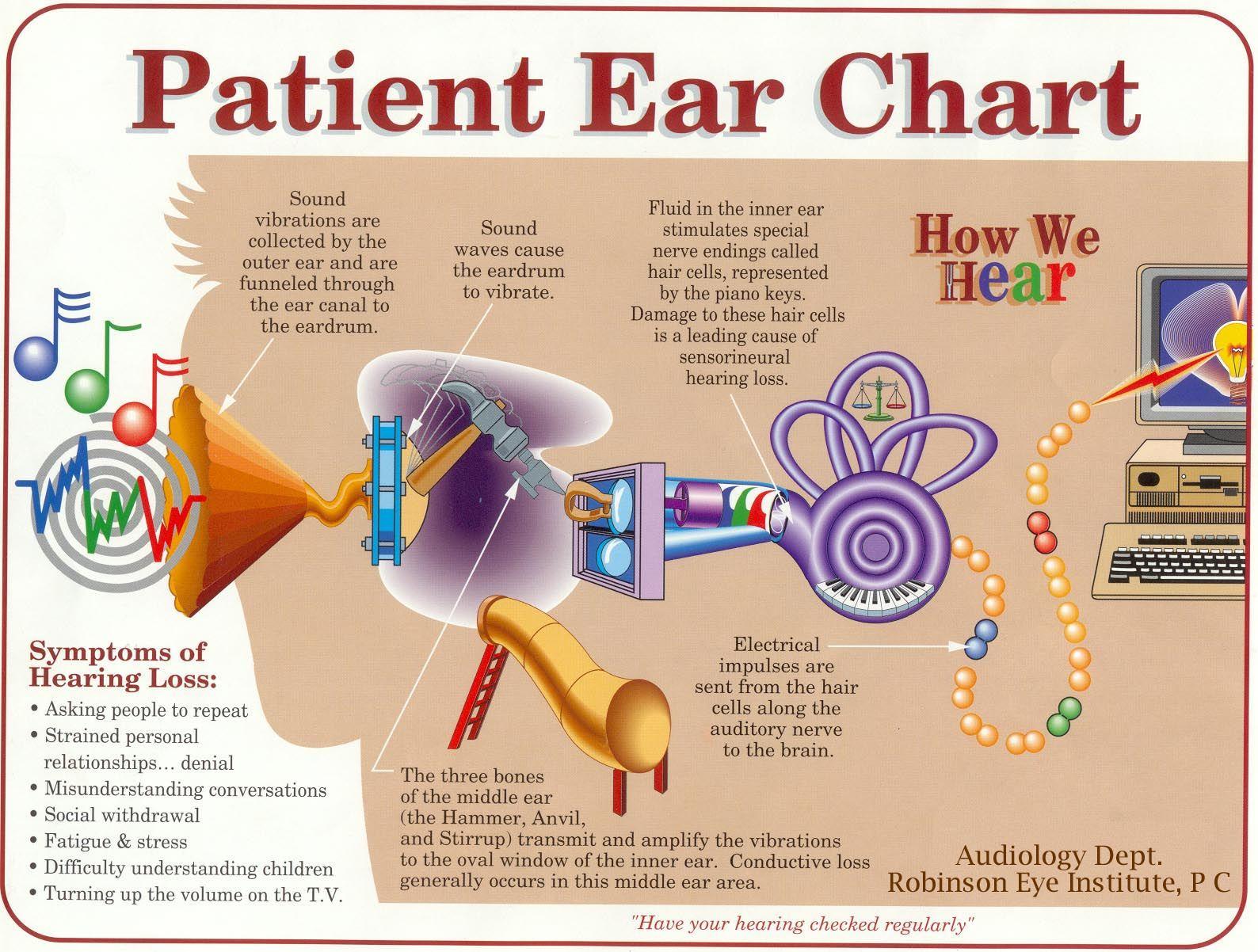 Ear chart | Ear | Pinterest | Fisiología, Lenguaje y Terapia del habla