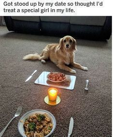 22 Funny Animal Pictures Of Today S Funnymemes Explore Pinterest Funnymemes Explore Pinterest Funnyme Dog Memes Funny Dog Memes Funny Animal Pictures