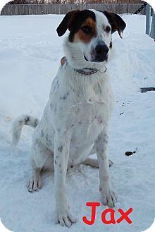 Erie Pa Treeing Walker Coonhound Mix Meet Jax A Dog For