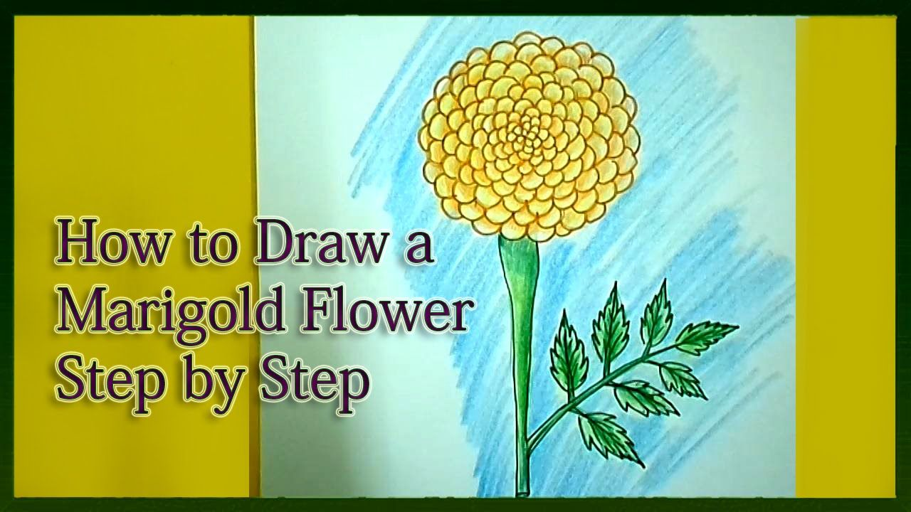 30 Top For Marigold Flower Drawing Easy For Kids