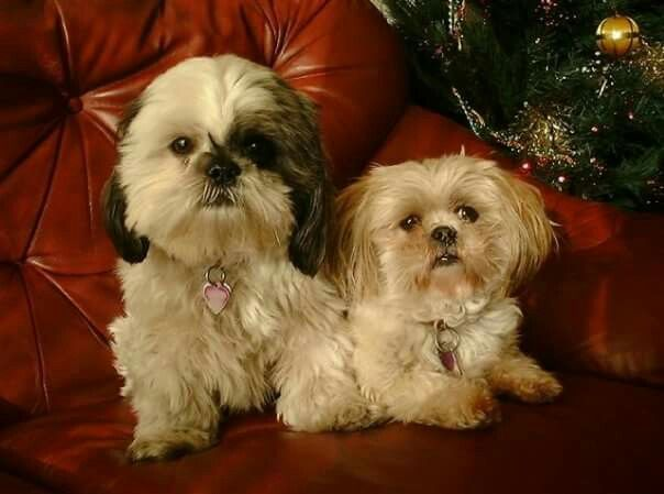 Merry Christmas from Mollie  Mitzi xxx Cute Animals Pinterest