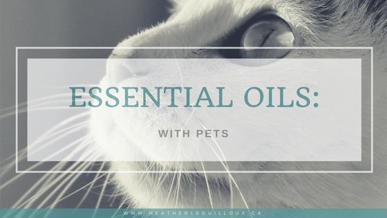 Essential Oils With Pets Essential oils, Pets, Oils