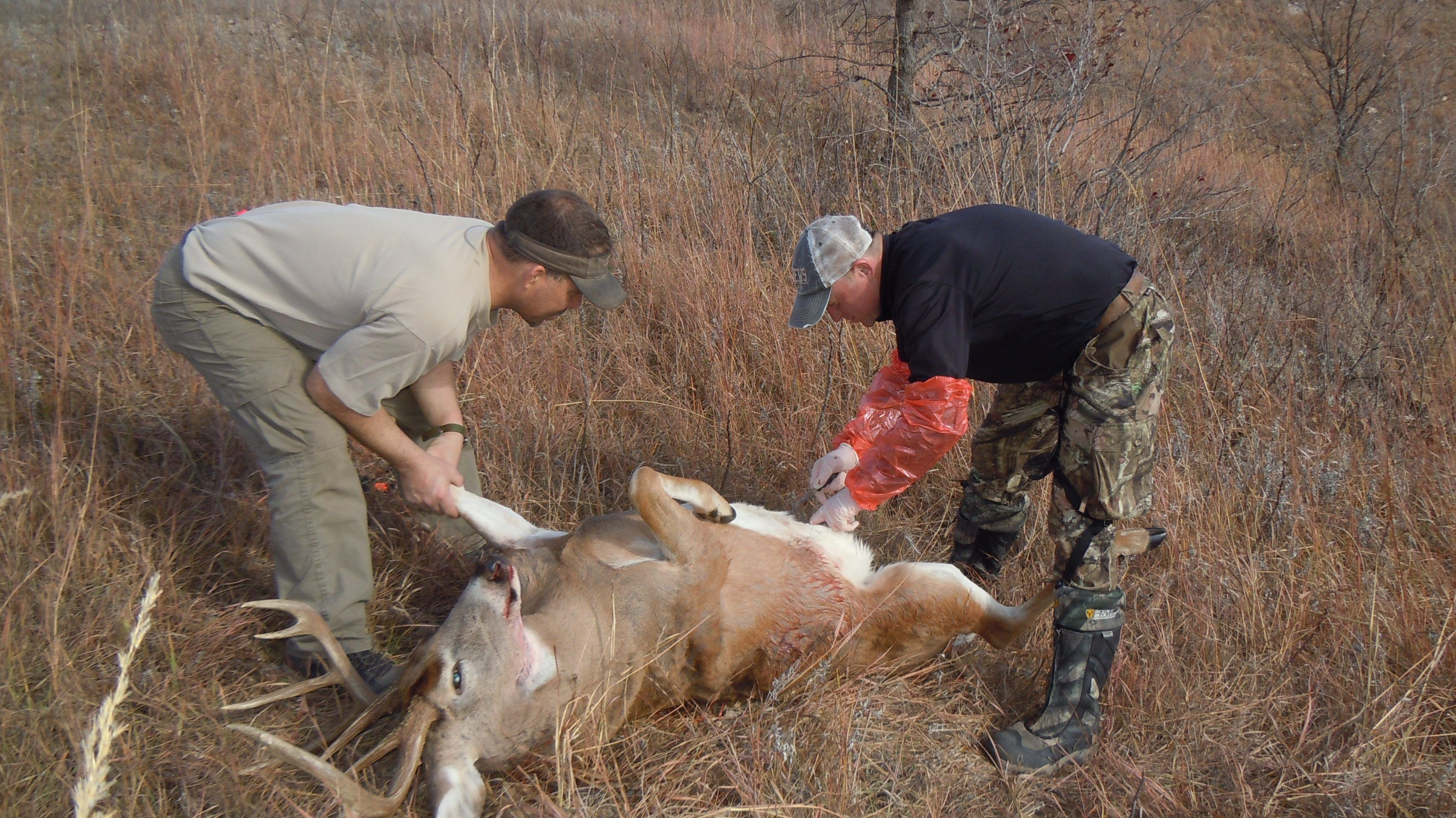 Learn how to clean a deer Deer, Whitetail deer, Big game
