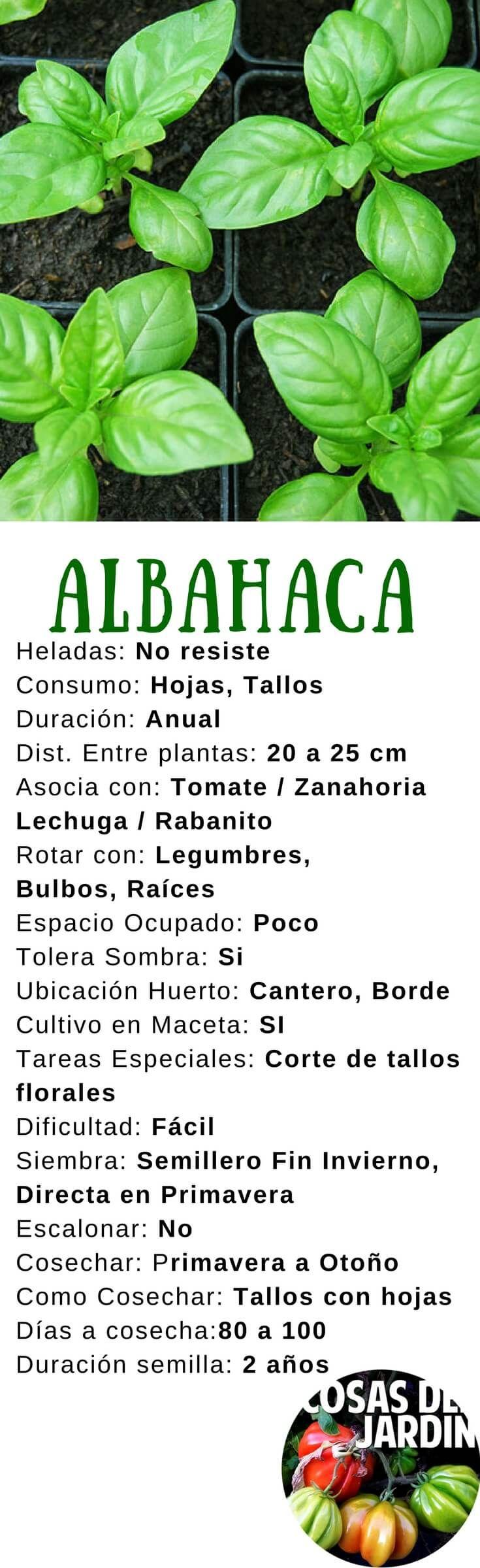6 consejos para cultivar albahaca en el jard n guias de for Jardineria al aire libre casa pendiente