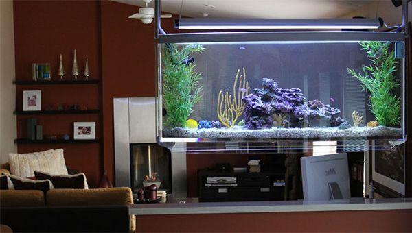 Top 7 Aquarium Designs for your Interior Design #interiordesign ...