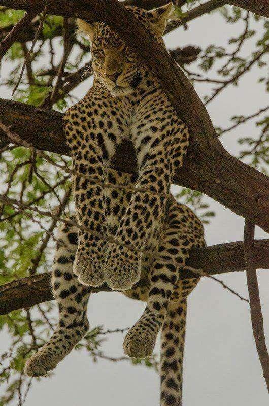 Photo of Salir – Kelly Blog – Grandes felinos * wrooooaaarcchhhh * – # Salir #Blog #Kell …