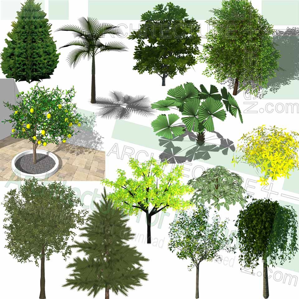 Trees, Shrubs and Flowering plants, Sketchup 3D models for ...