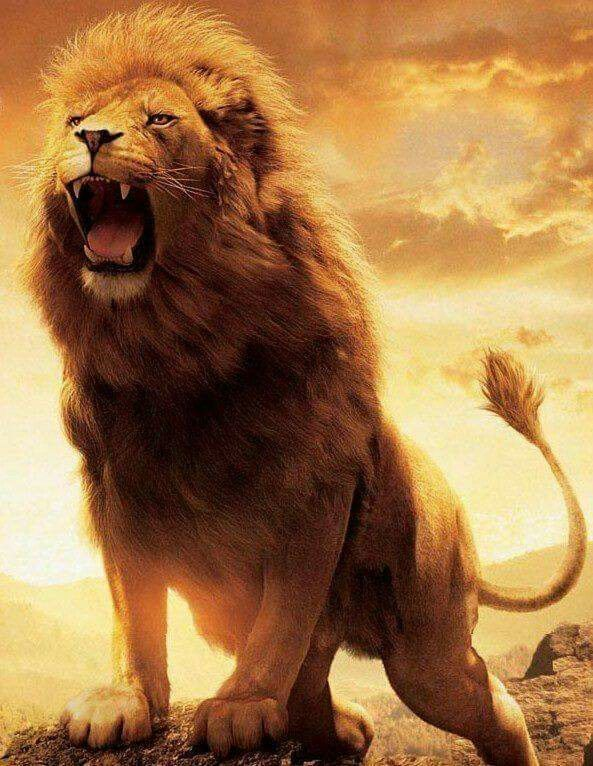The Ferocious Aslan Lion Pictures Images Male Rugissant