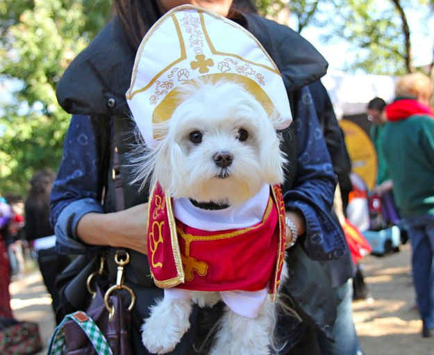 The New Pope Cute Dog Costumes Dog Halloween Costumes Puppy