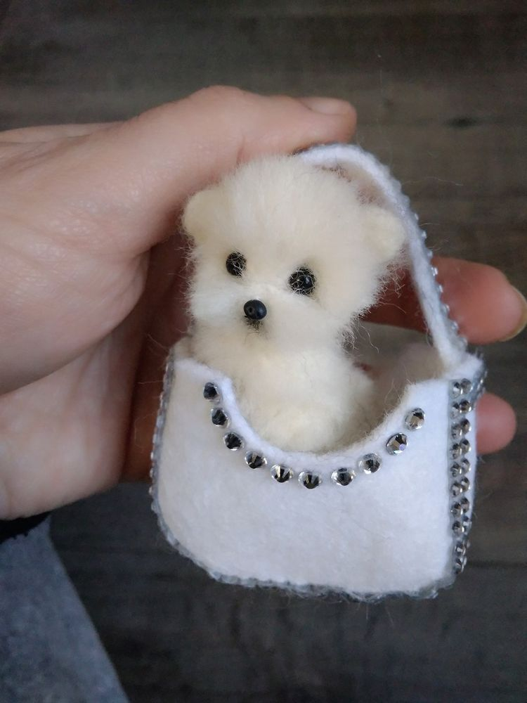Pictures Of Real Small Dogs