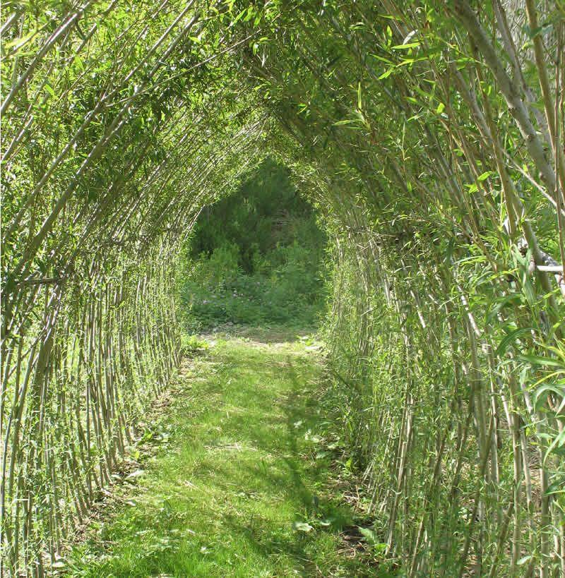 Living Willow Dream Garden, Willow Branch Outdoor Living