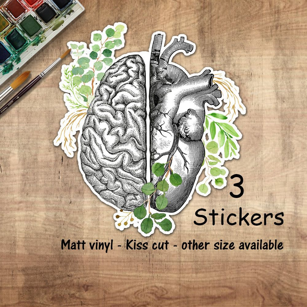 Head and heart,Human anatomy brain and heart,vinyl stickers,science stickers, scienze student gift,medical students,watercolor art, matt #medicalstudents
