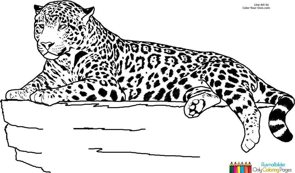 Ausmalbilder Jaguar Tier In 2020 Jaguar Tier Ausmalbilder Tiere Malvorlagen Blumen