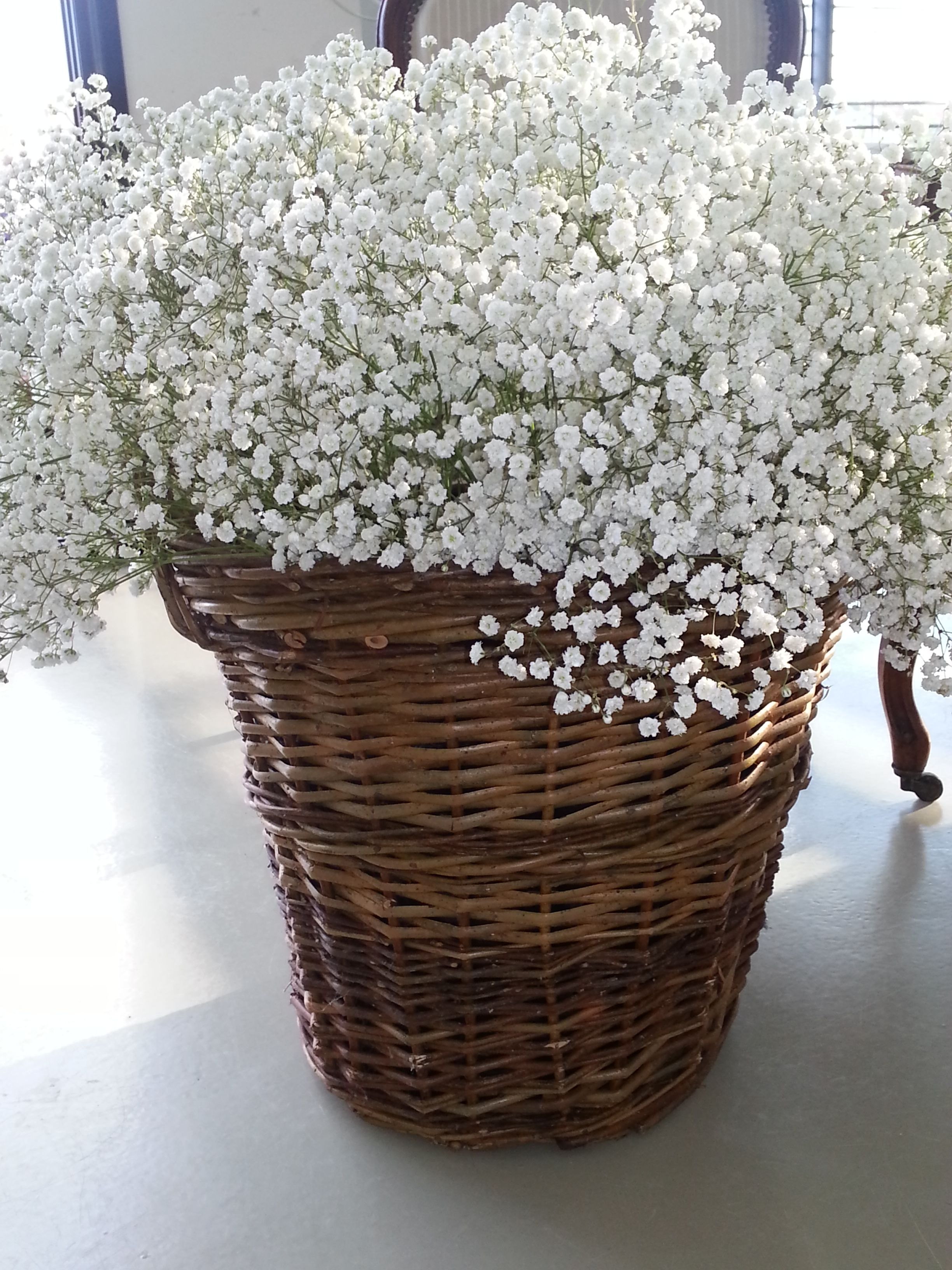 gypsophile dans panier en osier osier flowers babys. Black Bedroom Furniture Sets. Home Design Ideas