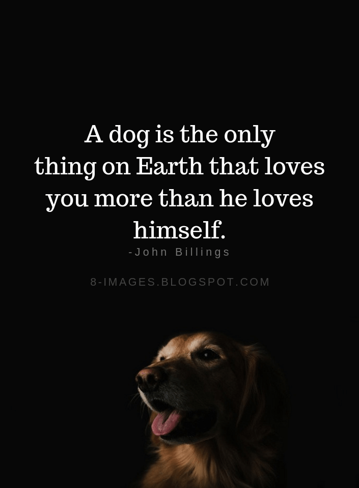 The Gift Of A Great Dog Dog Quotes Dog Poems Dog Quotes Love