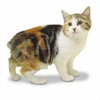 WHISKAS Australia | Whiskas Cat Breeds
