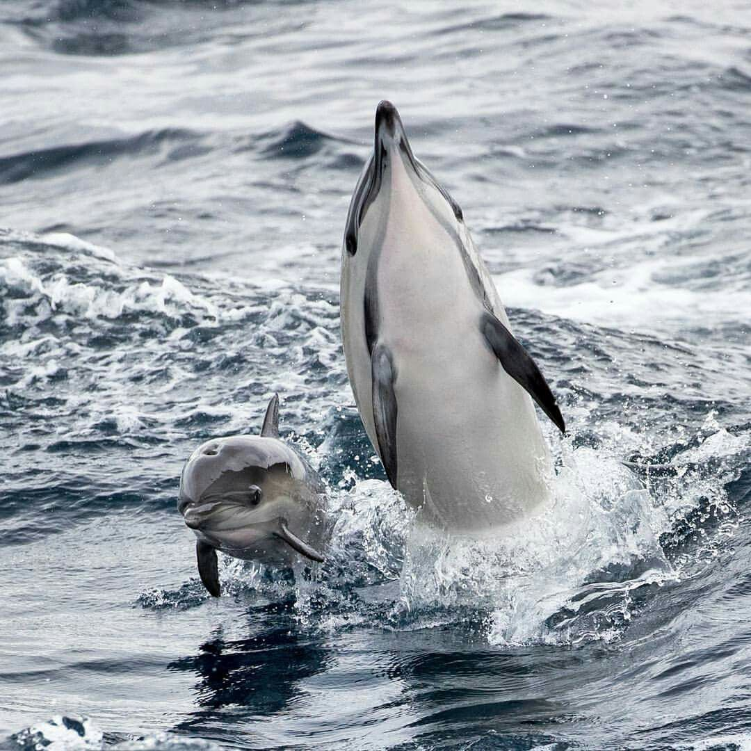 Белуха фото дельфин раньше работал