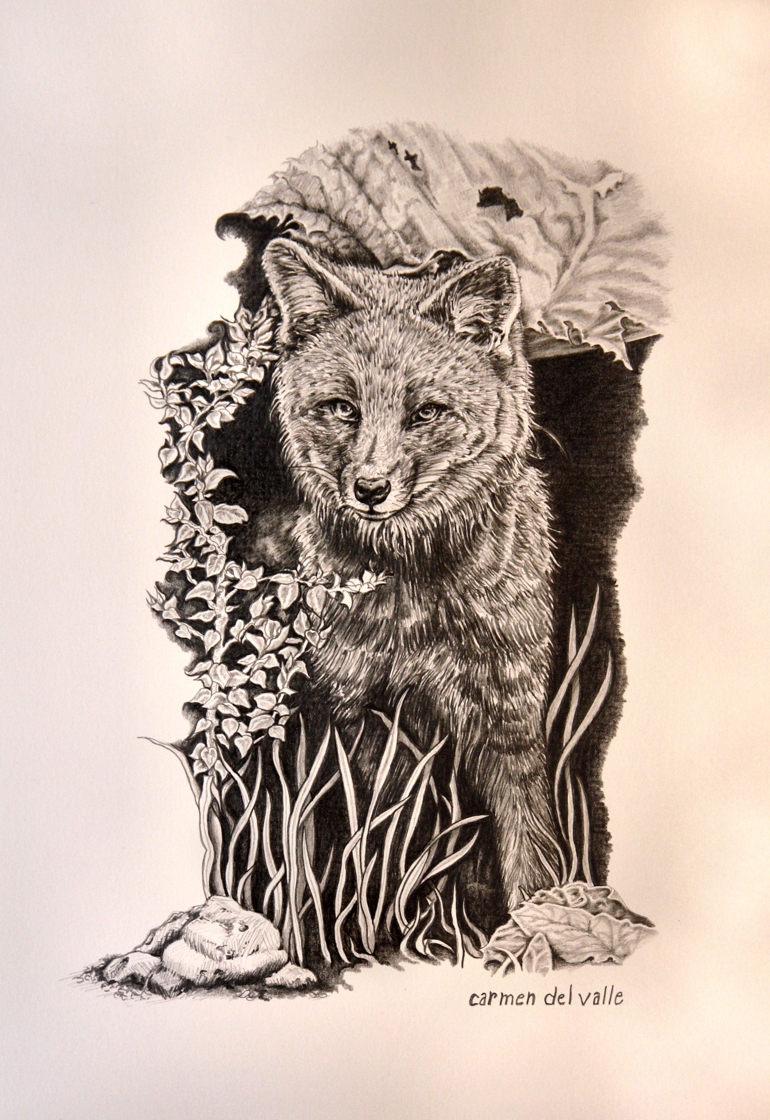 """Darwin's Fox Endangered Species"" Graphite Pencil Drawing"