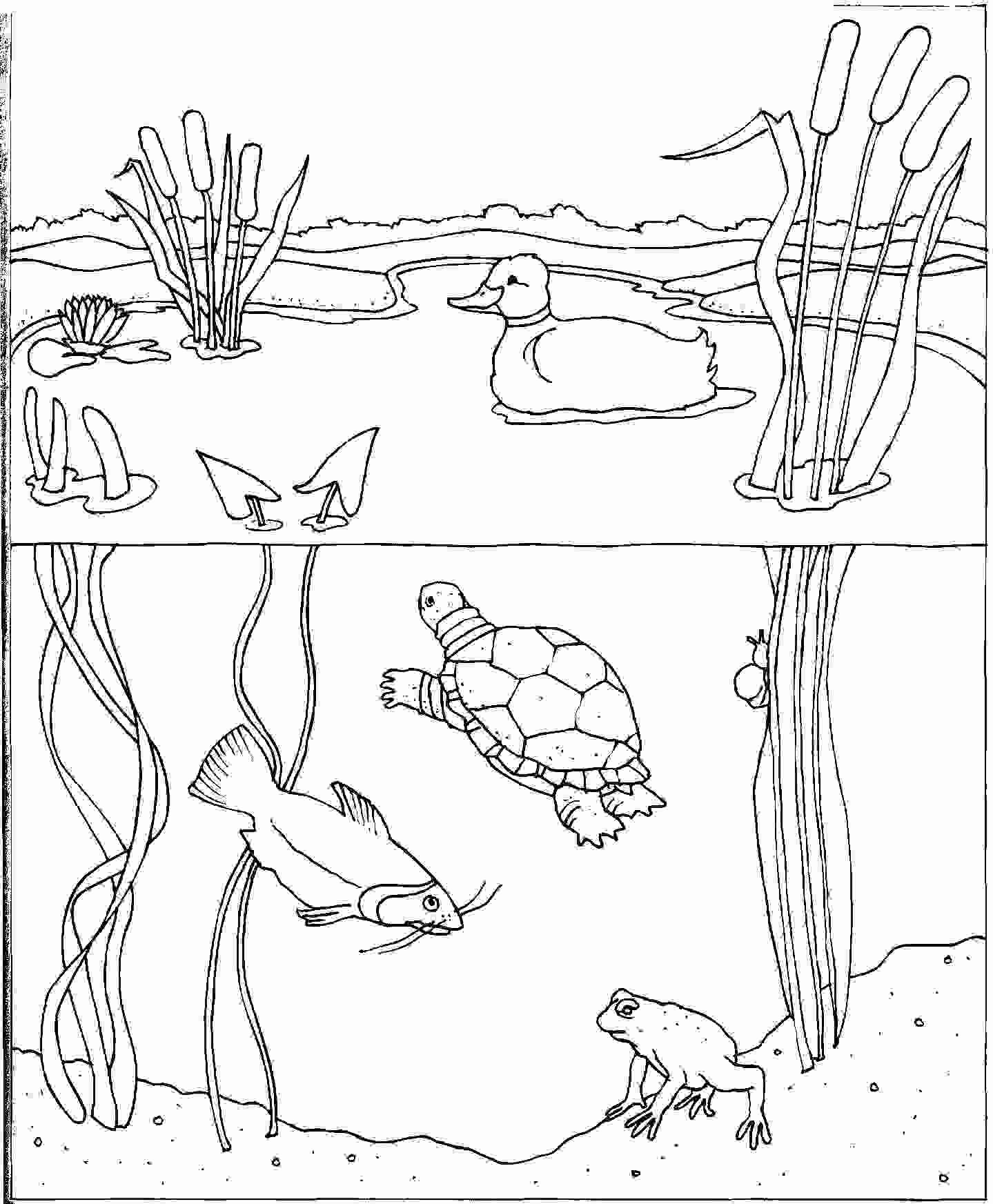 Water Cycle Coloring Page Elegant Free Coloring Page Water