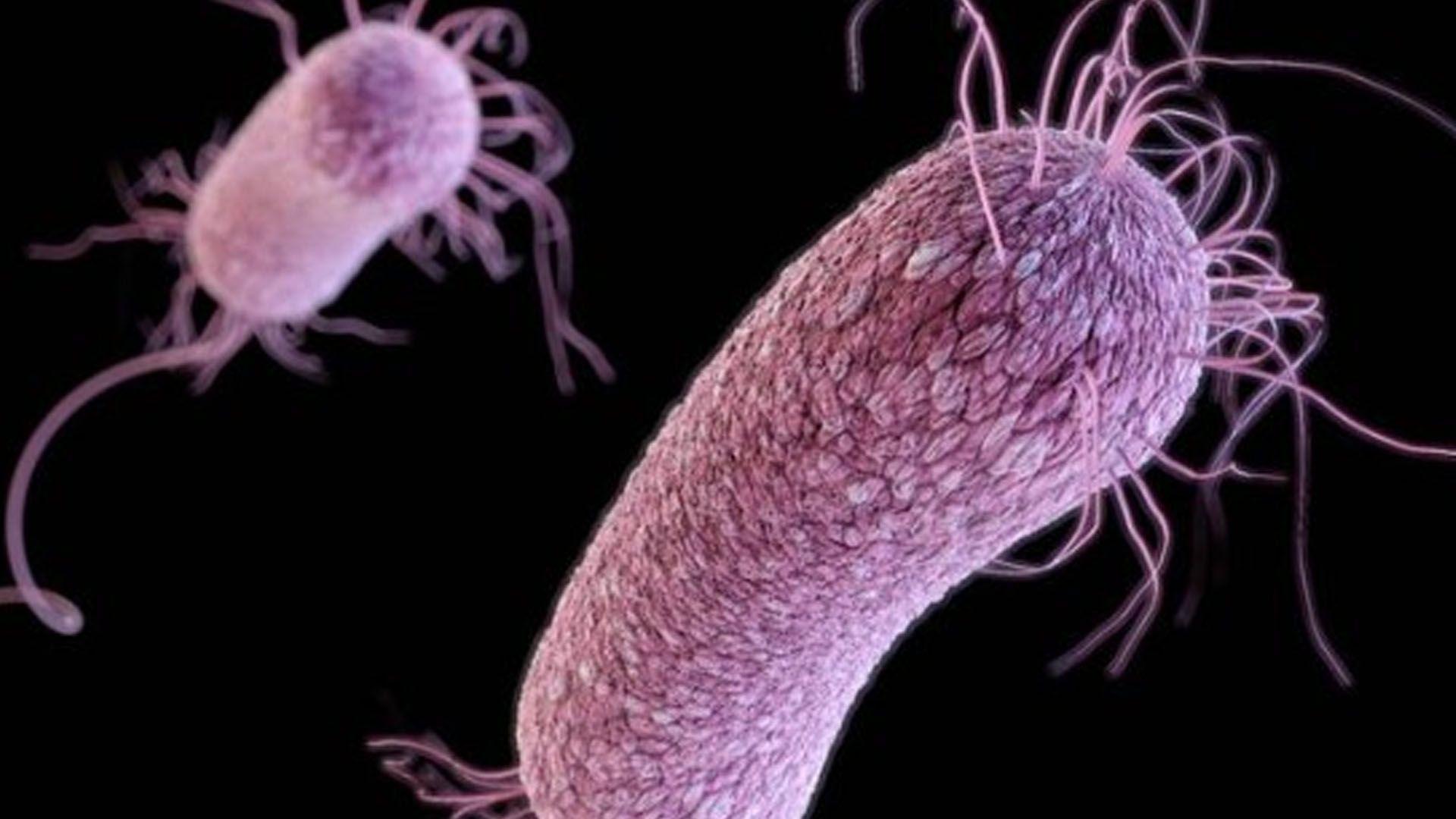 Novo estudo publicado na Nature desvenda o mecanismo de aborção da prata, revelando que o metal transforma bactérias em zumbis.