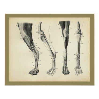 Dog Leg Bones Muscle Veterinary Anatomy Print Vintage Gifts Retro