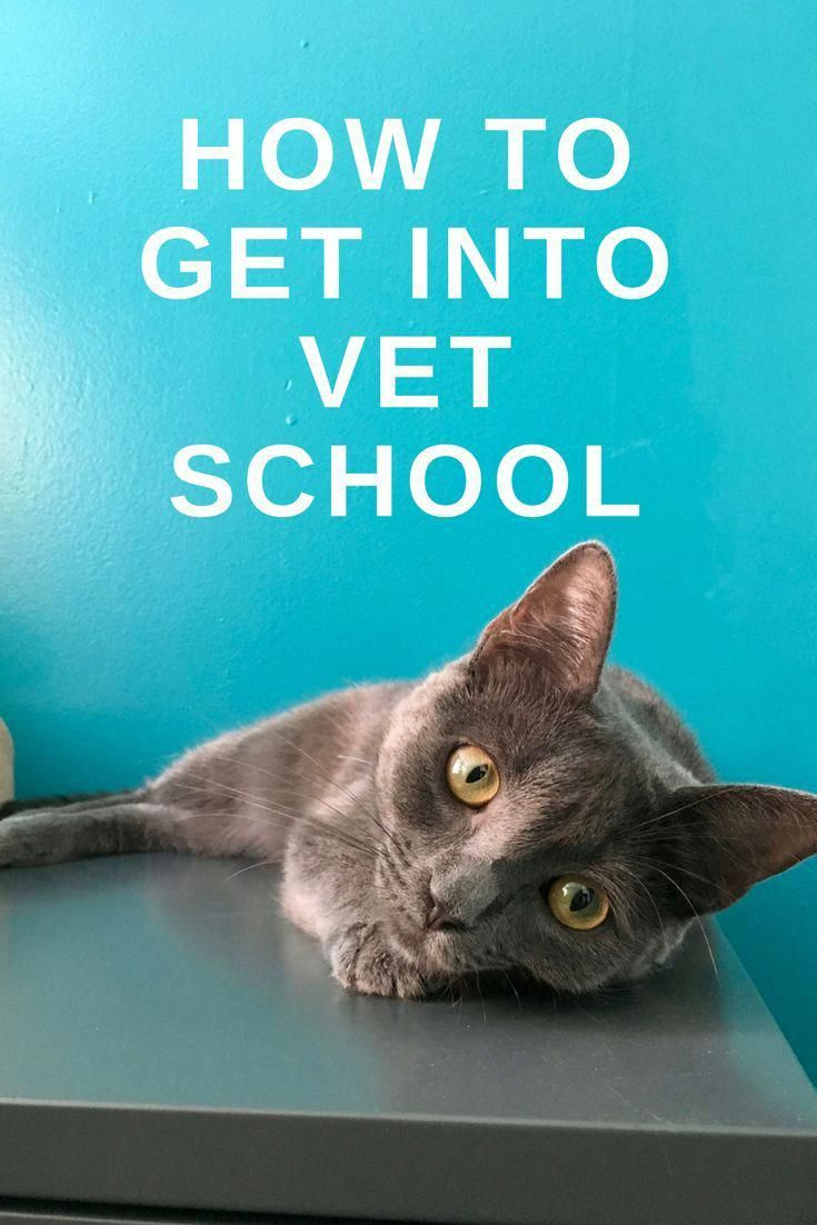how to become a vet assistant in bc